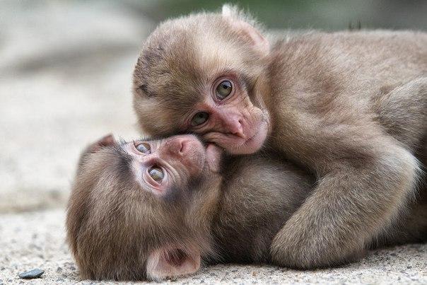 обезьнки