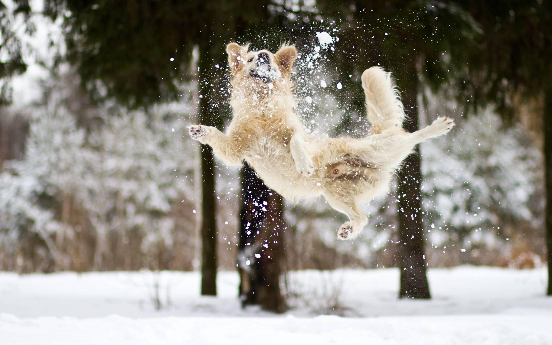 пёс и снег