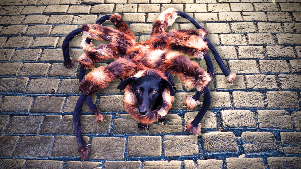Собака-паук