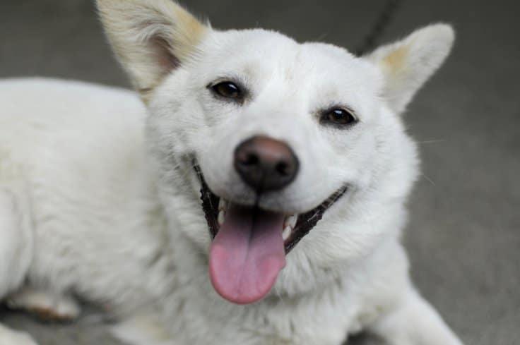 собачья улыбка