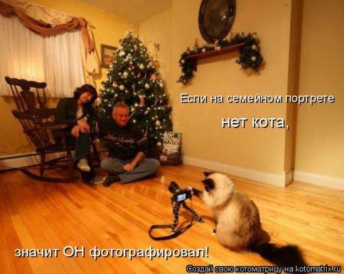 фотожабы котов