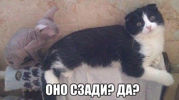 Кошки - они такие