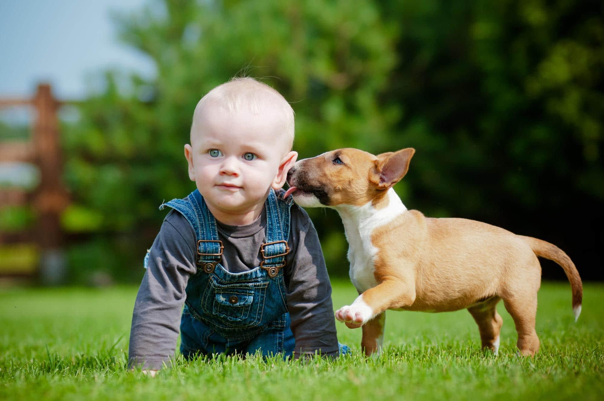 дети и щенки