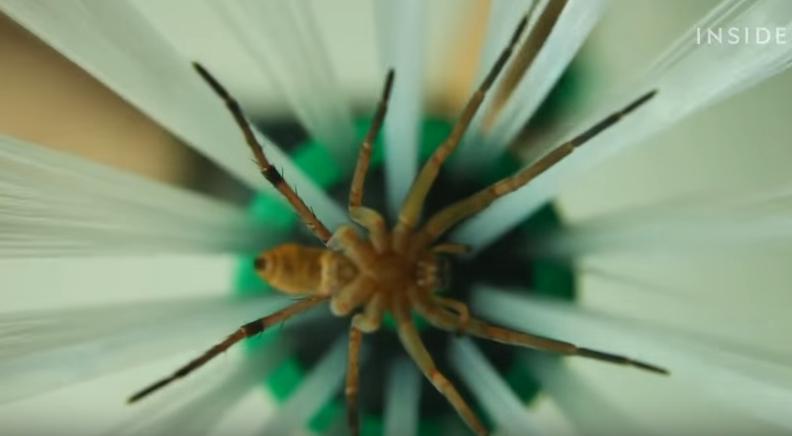 Ловушка для пауков