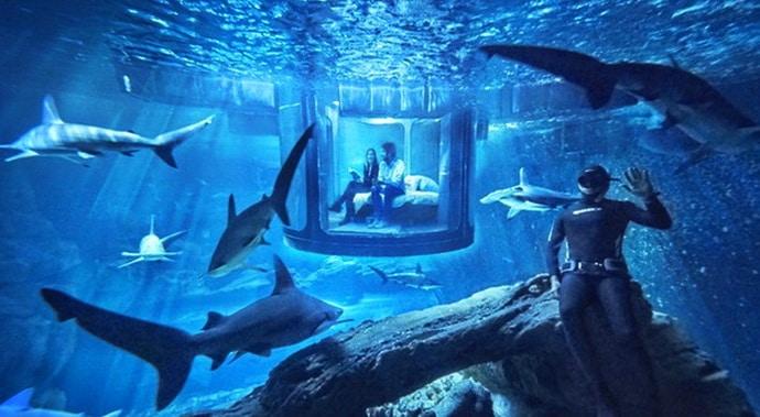 airbnb-sharks-sleepover-paris-01