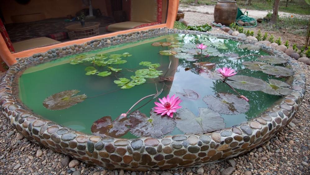 Небольшой пруд с лилиями