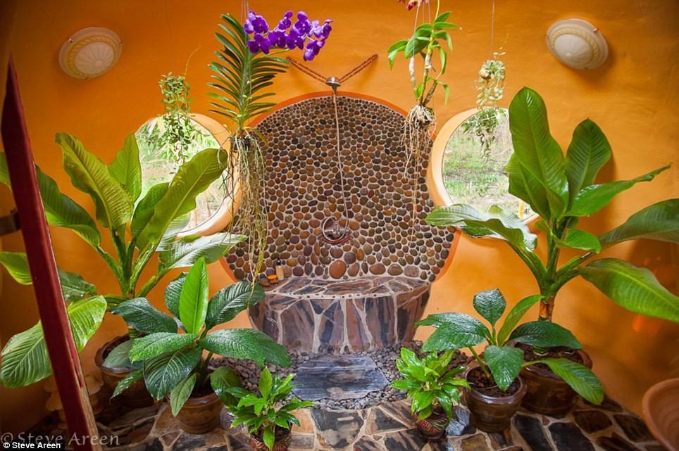 Домашние растения с широкими листьями