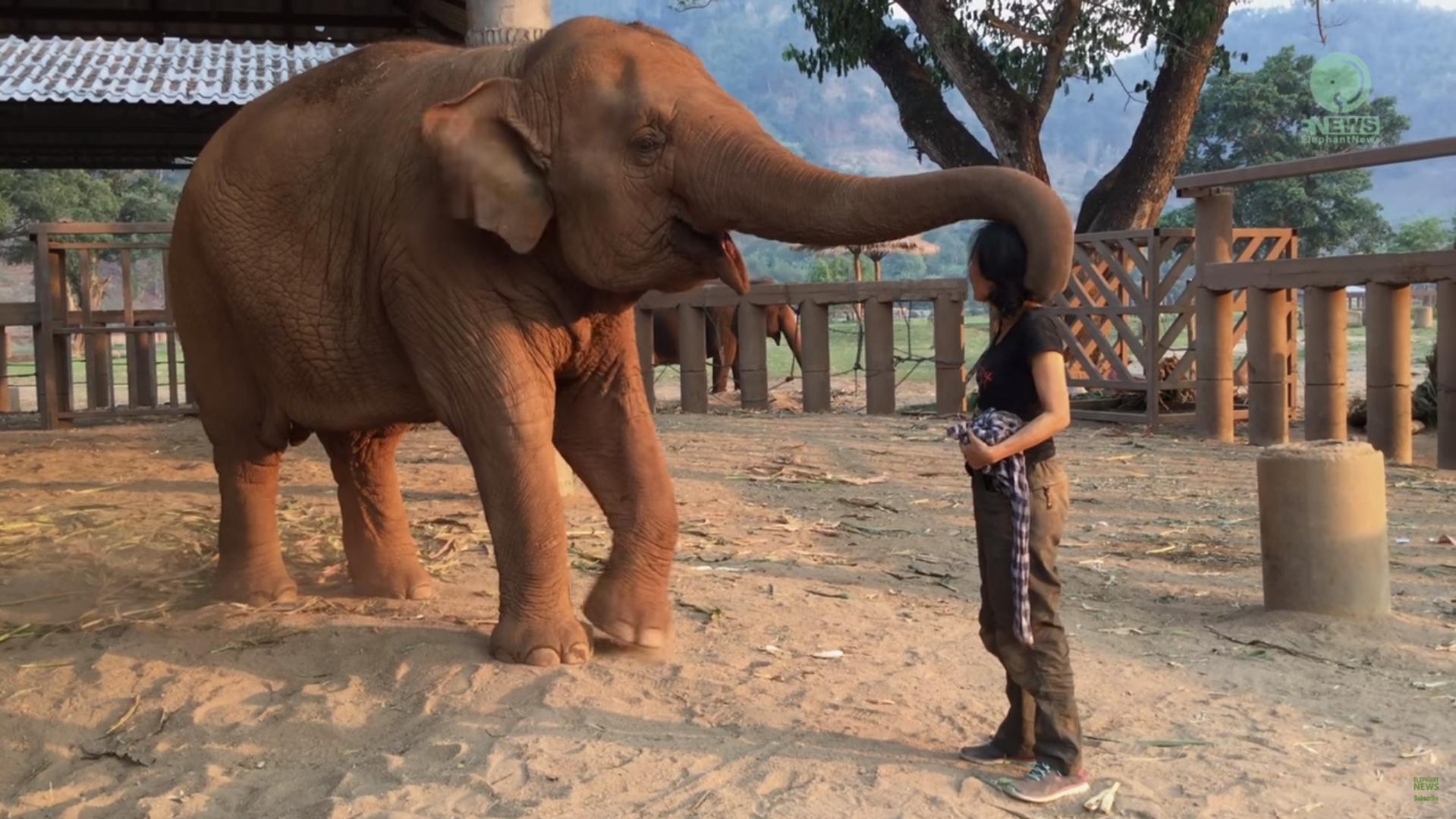 kolibelnaya-dlya-slonihi
