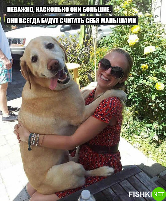dog-logika1