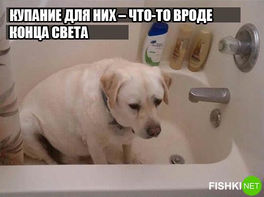 dog-logika2