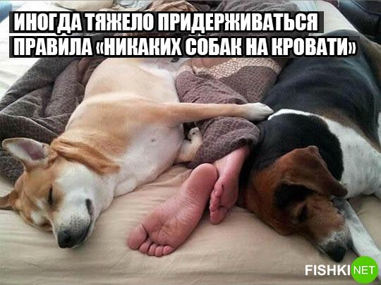 dog-logika3