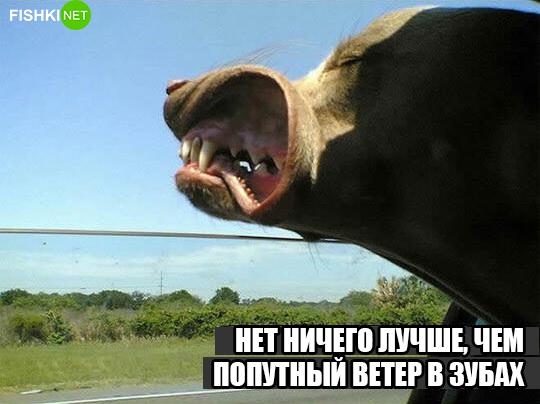 dog-logika4