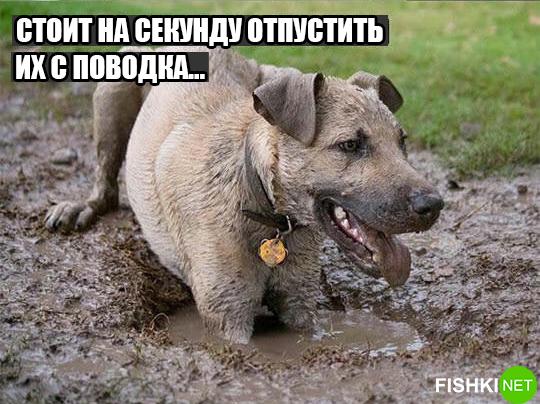 dog-logika5