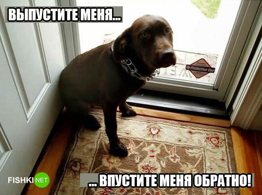 dog-logika9