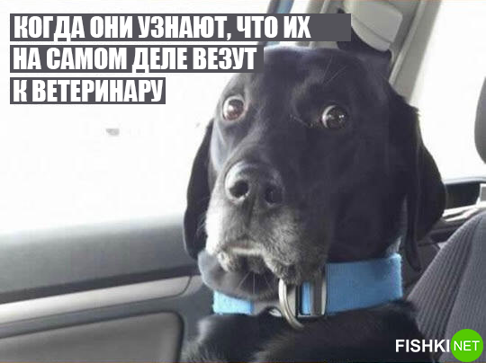 dog-logika11