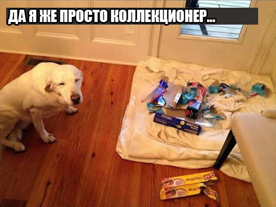 dog-logika12