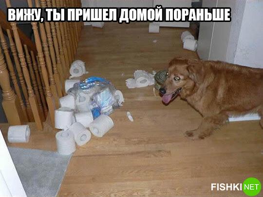 dog-logika13
