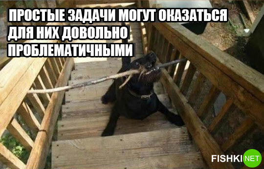 dog-logika14
