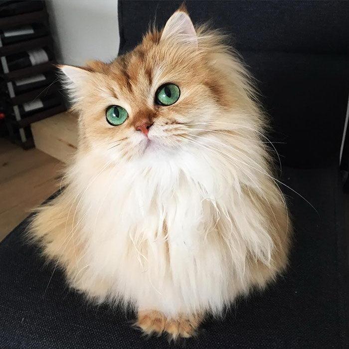 smuzi-cat