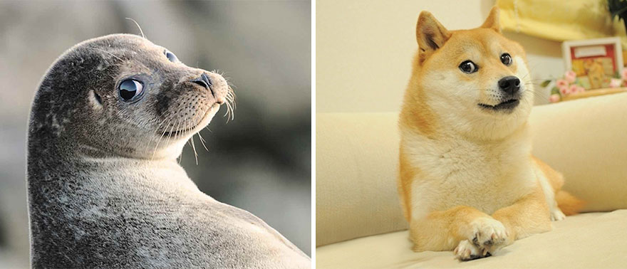 funny-seals-look-like-dogs7