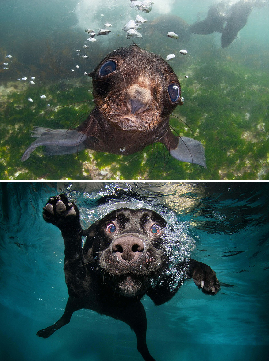 funny-seals-look-like-dogs2