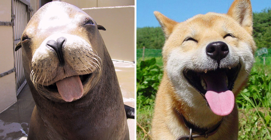 funny-seals-look-like-dogs0