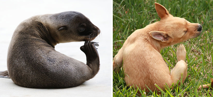funny-seals-look-like-dogs13