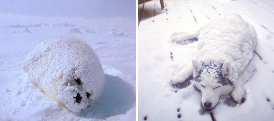 funny-seals-look-like-dogs8
