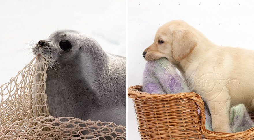 funny-seals-look-like-dogs10