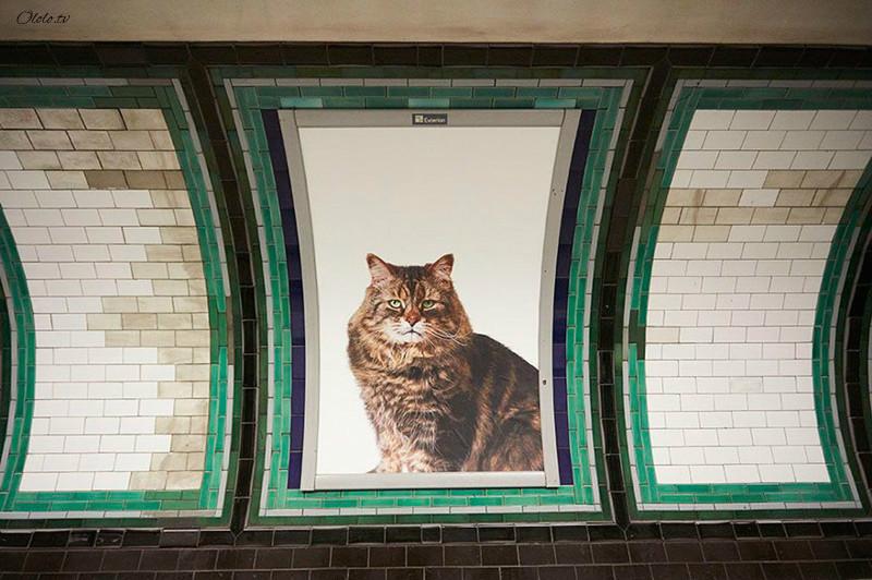 Жители Лондона выкупили все рекламные объявления на станции метро и заменили их на котиков