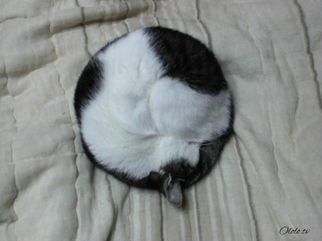 20 изобретательных котов, которые спят изо всех сил