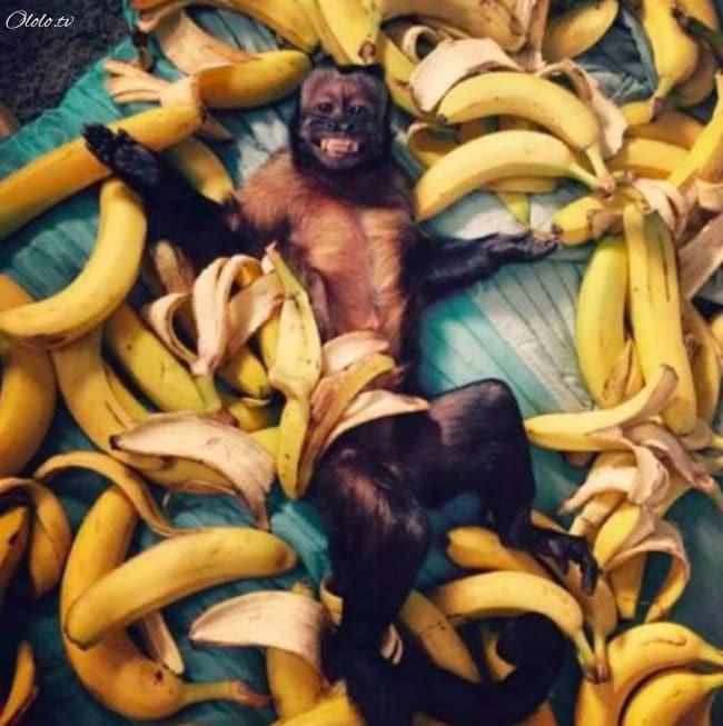 18 доказательств, что животные умеют радоваться жизни даже лучше нас рис 15