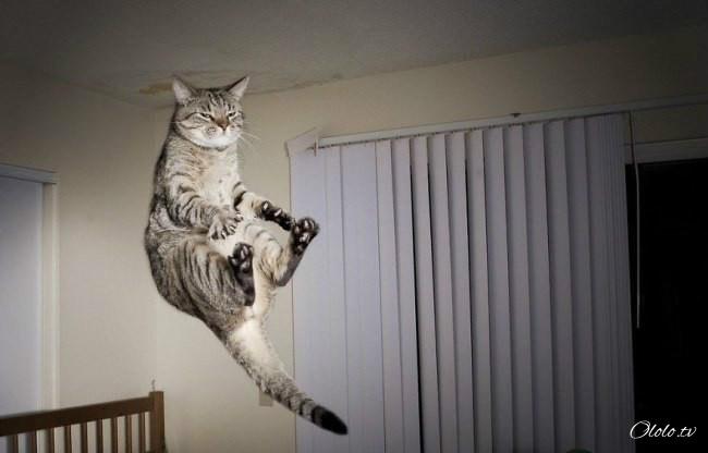 10 фотографий котов, сделанных в самый нужный момент