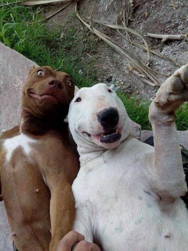 23 фотографии животных, глядя на которые невозможно не улыбнуться
