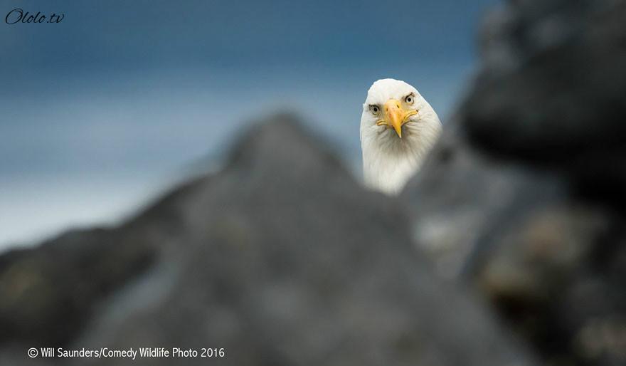 23 самых смешных фотографий с конкурса Comedy Wildlife Photography Awards 2016