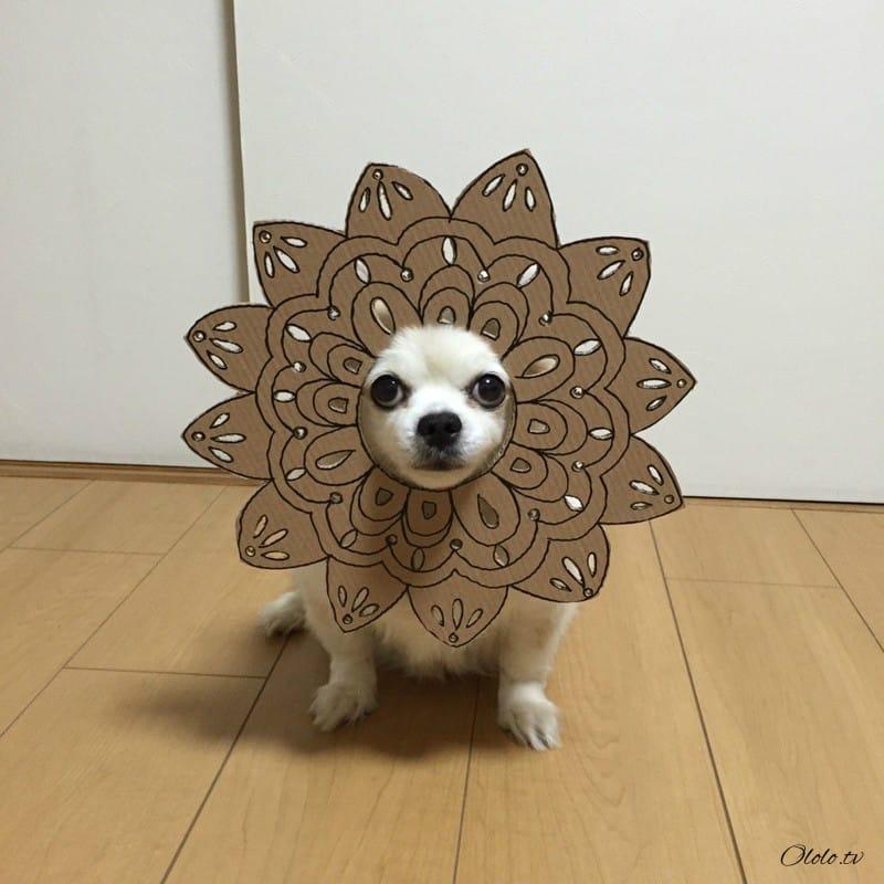Девушка делает уморительные костюмы из картона для своей собаки
