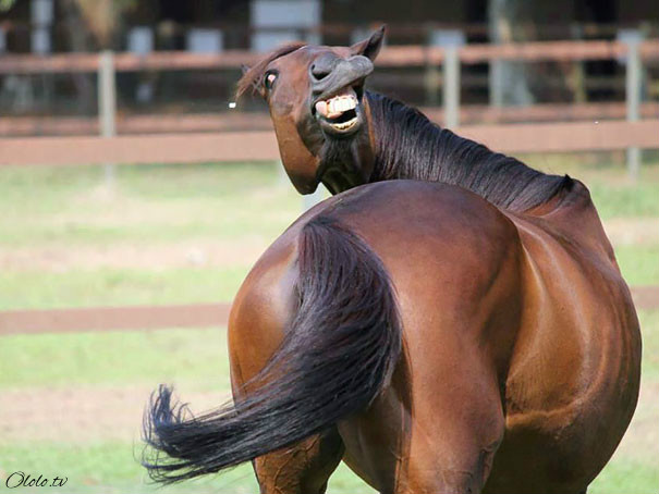 Улыбочку: если б животные могли говорить, они попросили бы вас удалить эти адские фото рис 24