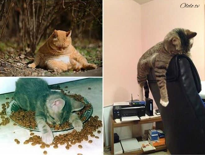 Фотографии животных, которые напоминают людей после бурных вечеринок рис 4