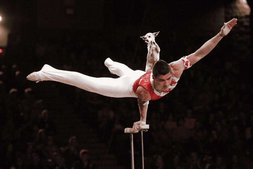 Зрители баскетбольного матча думали, что это будет обычное выступление циркача. Но неожиданно появился его необычный напарник
