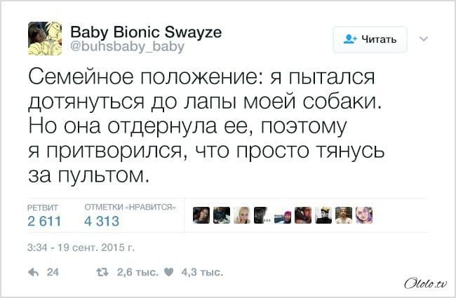 18 твитов о домашних питомцах, которые отправят мозг отдыхать