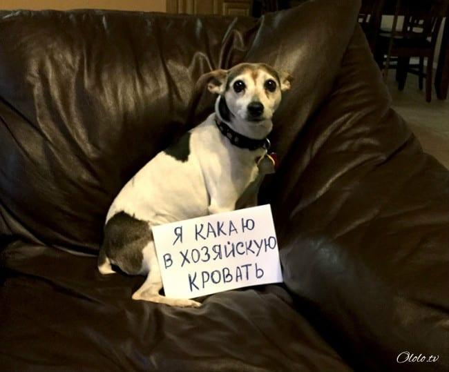 17 собак, которые больше так не будут. Наверное