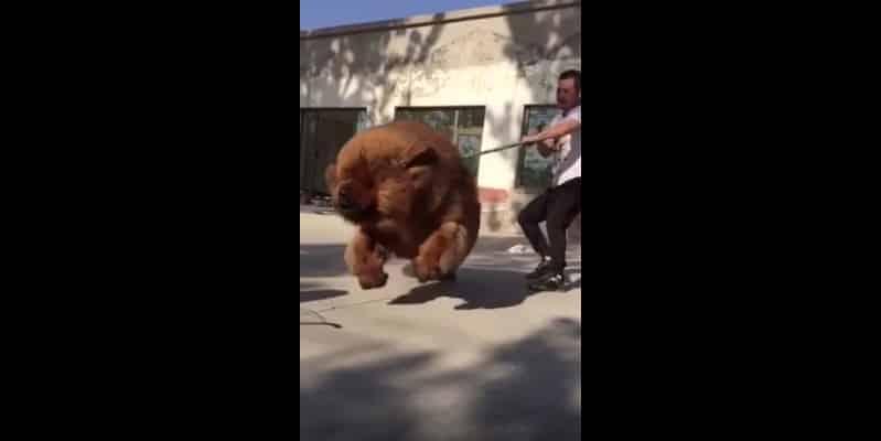 Не пугайтесь дети, пёсик просто хочет поиграть. Видео