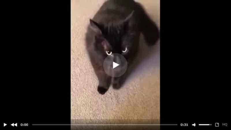 Кот, которому нельзя отказывать. Видео