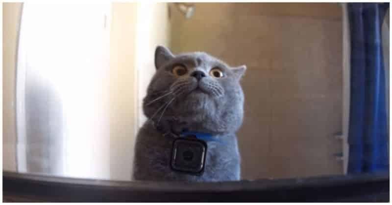 Один день из жизни домашнего кота. Видео