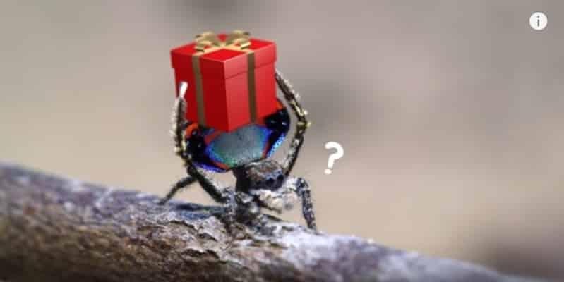 Милые рождественские паучки празднуют рождество. Видео