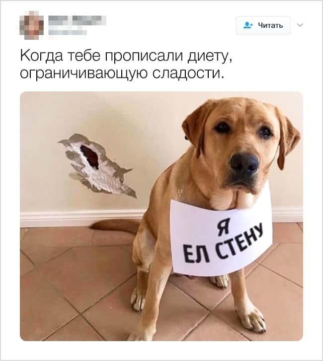 24 твита, которые доказывают, что жизнь с появлением животных меняется в лучшую сторону рис 8