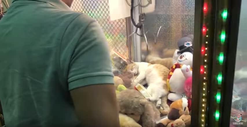 """Мужчина попытался """"выиграть"""" сладко спящую в игровом автомате кошку"""