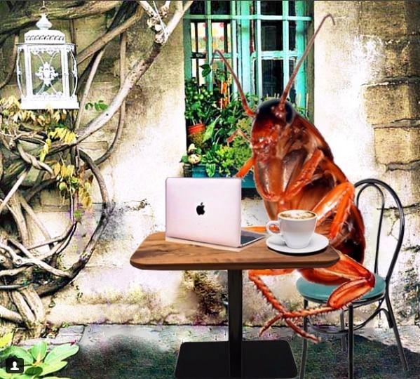 Дневники таракана: найден самый странный аккаунт в Инстаграм!