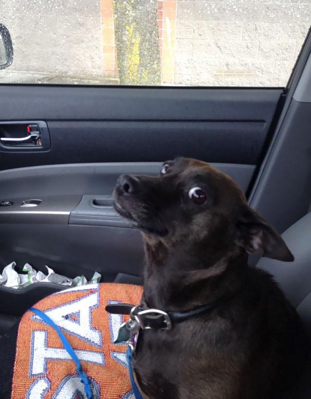 15 собак, которые поняли, что их везут к ветеринару. Часть I