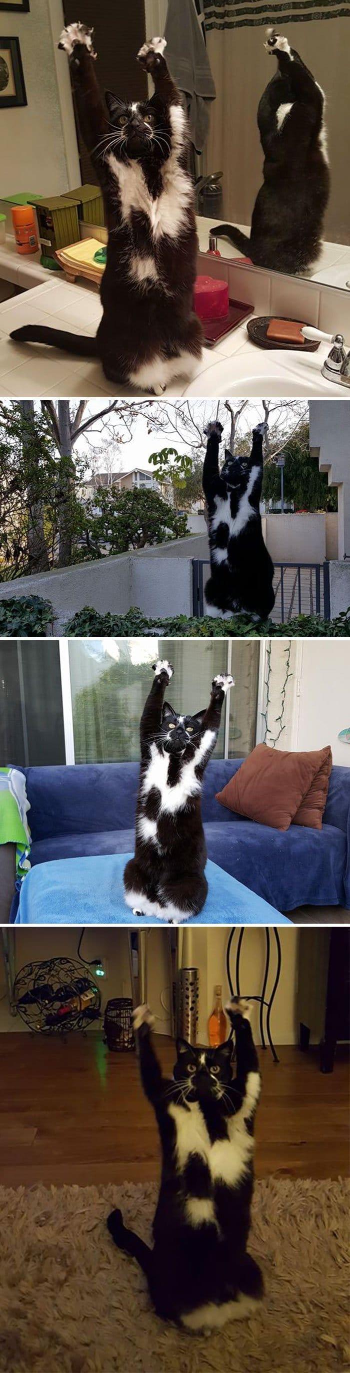 17+ котов, застигнутых врасплох за странным занятием!